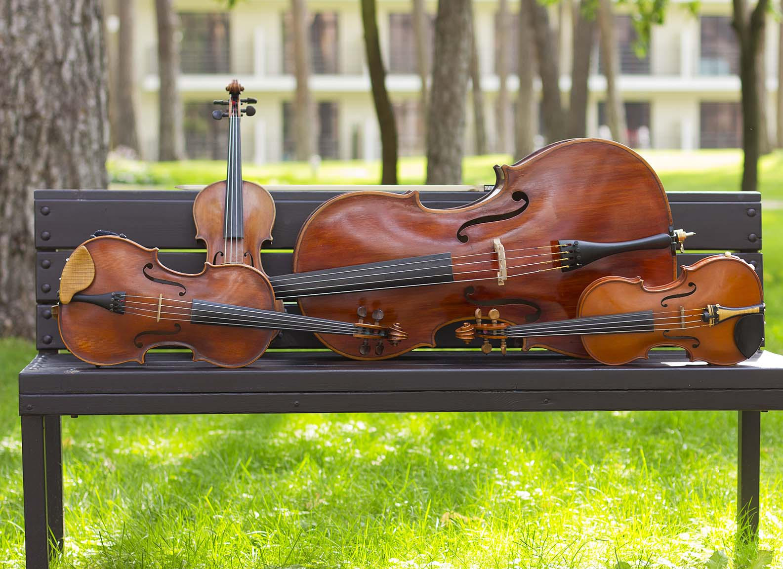 An Elegant Touch of Strings Quartet,Trio,Duo,Solo | Hire a